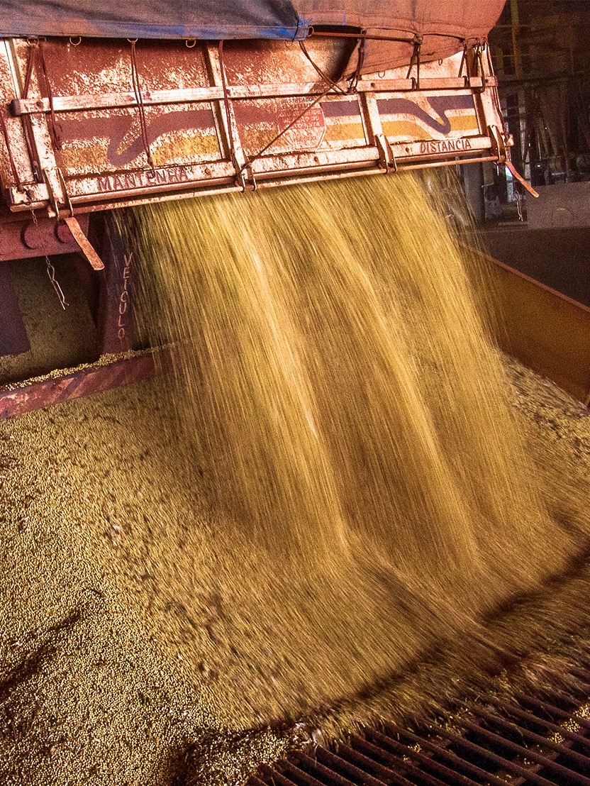 Truck makes a soybean dump at an silo in Brazil (Mato Grosso State), March 01, 2008